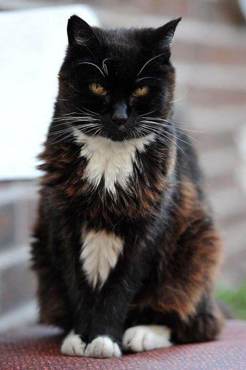 Creme Puff fue una gata, conocida por haber muerto a la edad de 38 años y 3 días, (3 de agosto de 1968 — 6 de agosto de 2005).Según la edición 2010 del Guinness World Records, se trata del gato doméstico más viejo del que se halle registro.