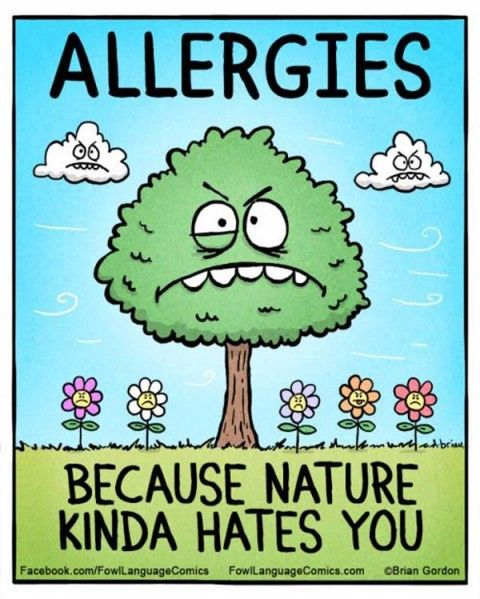 Funny pictures of the day 145 (31 pict) | Funny pictures-- allergies have not been making life easier