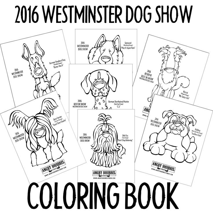 40 best Westminster Kennel Club Dog Show images on