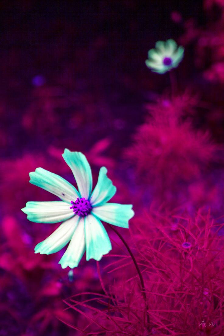 Dream in colors by An Drada on 500px