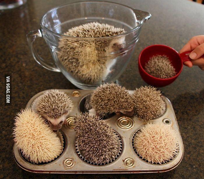 Making hedgehog cupcakes