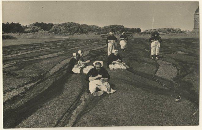 Harstenhoekweg, boetvelden met op de voorgrond een groepje boetsters aan het werk. 1955 Fotoburo Thuring #ZuidHolland #Scheveningen