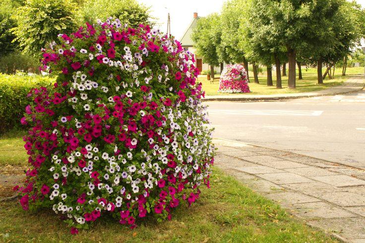 Terra Flower Power | Złoczew