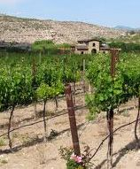 Wine Trail- wineries & tasting rooms located in Verde Valley near Prescott, Sedona and Cottonwood