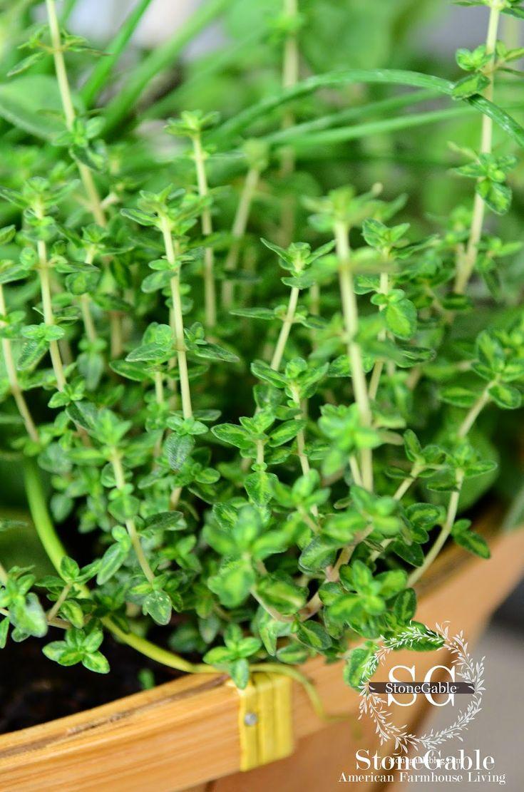 Herb Garden The 25 Best Kitchen Herb Gardens Ideas On Pinterest Kitchen