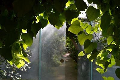 Invisible Paris: Anyone for tennis at the Jardin des Serres d'Auteuil?