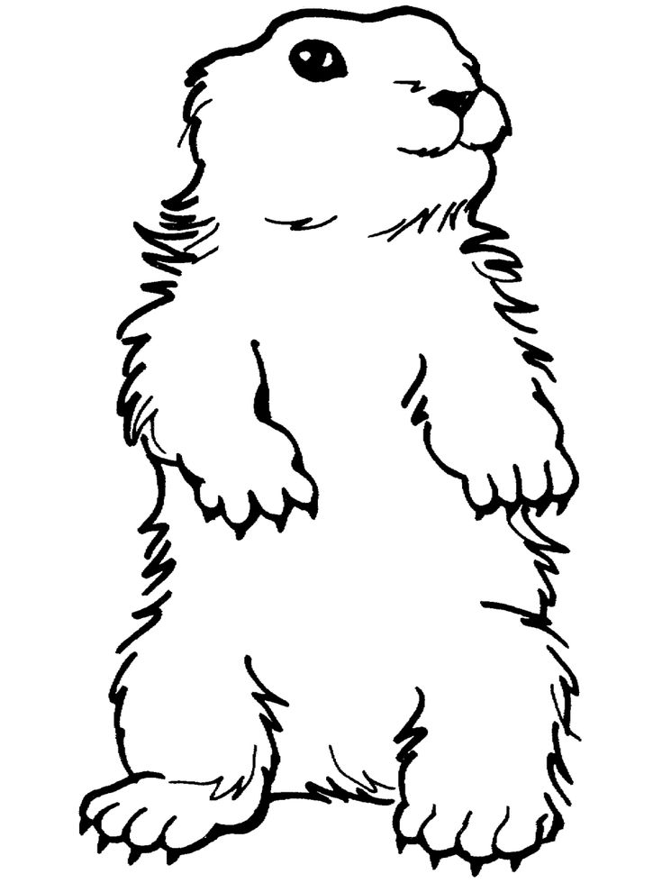 Standing Groundhog Coloring Page Free Printable Ebook Happy