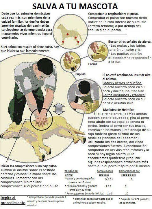 Como salvar a tu perro o gato haciendo los primeros auxilios