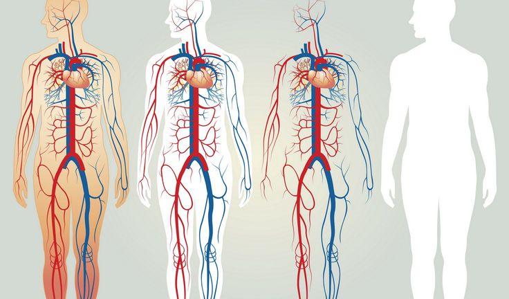 Кровь.Эритроциты.Лейкоциты. Кроветворение. Многие системы нашего организма еще не изучены. Ученые еще до конца не разобрались, как в нашем организме синтезирует кровь.Кровь— носительница …