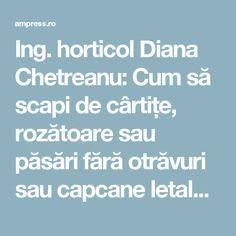 Ing. horticol Diana Chetreanu: Cum să scapi de cârtițe, rozătoare sau păsări fără otrăvuri sau capcane letale | AM Press