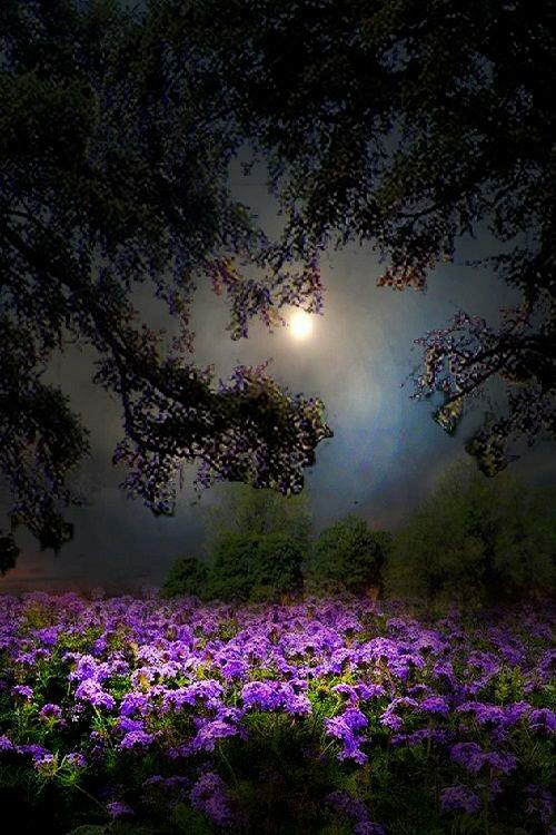 Beautiful Night Shot Of Moon And Flowers Nature Pinterest Gardens Beautiful And Night