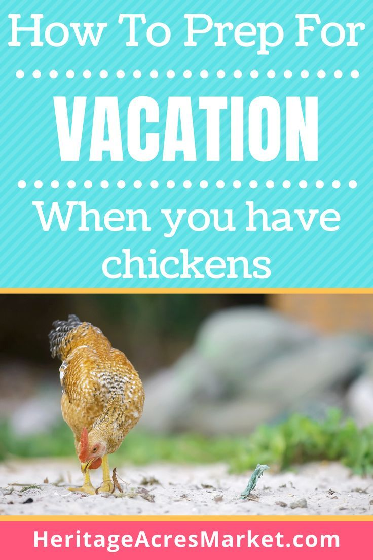 How To Vacation When You Have Chickens » Heritage Acres ...
