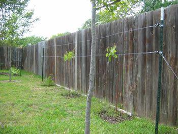 Diy Grape Trellis That Is Actually Possible To Use