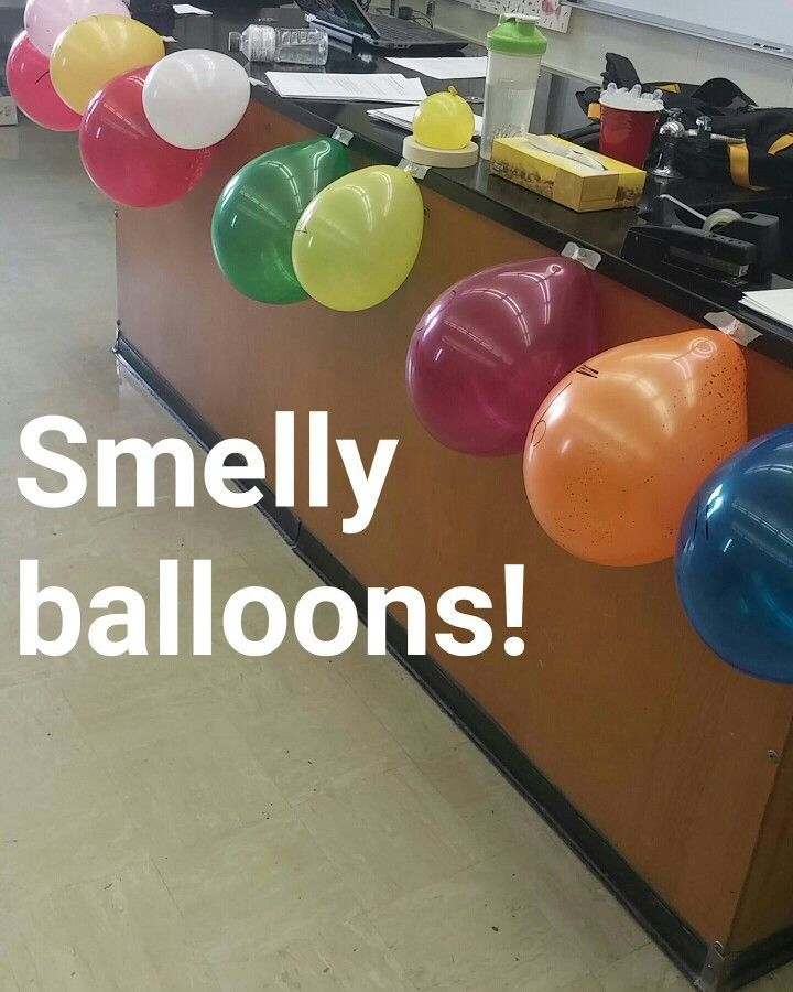 """A fun discrepant event for cell membrane transport. We introduced the  terms """"diffusion"""", """"osmosis"""" and """"semipermeable"""" today. Different extracts (peppermint, lemon, cinnamon, hazelnut, etc.) go inside the balloons. You have to redo a decent amount between classes because the scents go away after a while. Regardless, it was a fun day."""