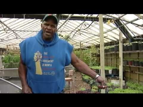 This one man, Will Allen [Urban Farmer] is amazing in his vervent hope for this to grow in every major city- Growing Power
