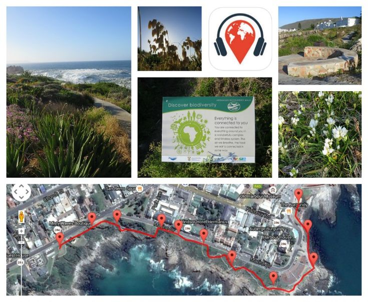 Voice tours for the Biodiversity Cliff Path Walk     https://voicemap.me/walk/hermanus/the-champagne-mile#_=_