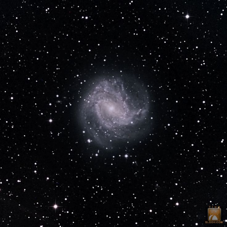 Southern Pinwheel Galaxy,M83 in the Constellation of Hydra through the 20''
