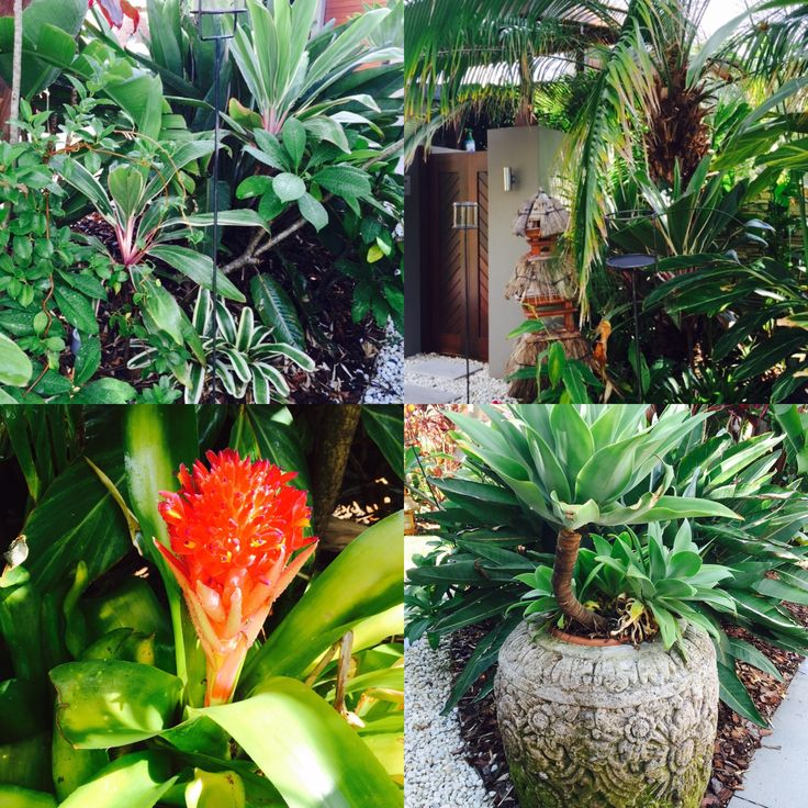 Tropical style - My home interiors by Tina