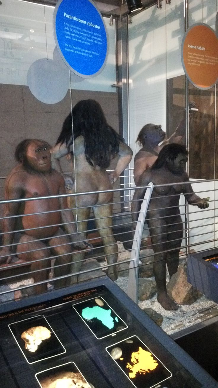 Description of human evolution at #CradelOfHumankind #Maropeng #SouthAfrica