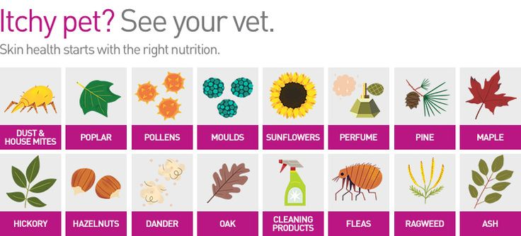 Itchy Pet? See Your Vet