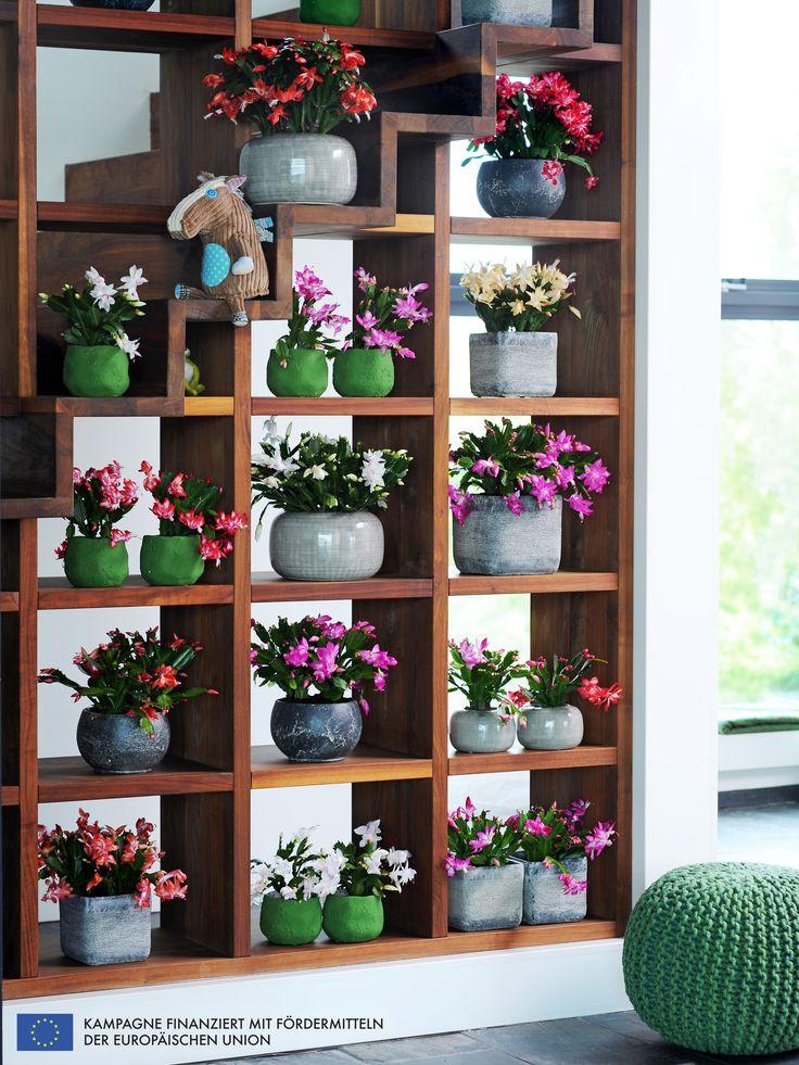 #schlumbergera #colourful #living #bunt #wohnen #decoration #deko #pflanzenfreude #weihnachtskaktus