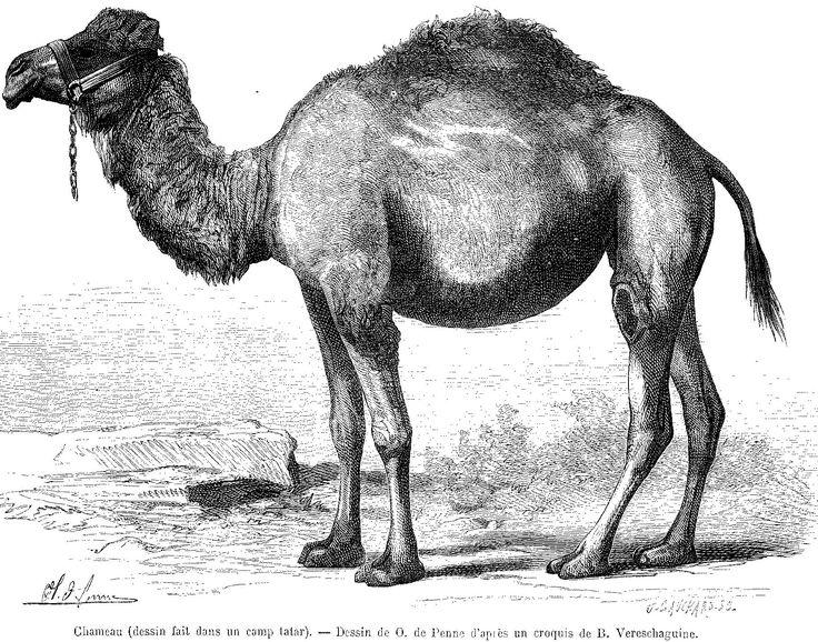 Chamea - Vasily Vasilievich Vereshchagin - Le Tour du monde (Paris - 1860-1914) | jpg (1813×1424)