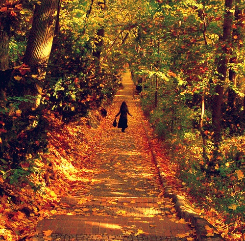 a golden delight Lazienki Park, Warsaw