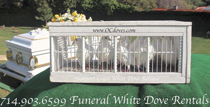 Funeral White Dove Release Forest Lawn Memorial Park, Glendale, CA Funeral Dove services www.OCdoves.com call 1 (7I4) 903 - 6.5.9.9. #One Rated White Dove Service #funeral #funerals #ForestLawn #ForestLawnMemorialPark #WhiteDoves #rental #WhiteDove #doverelease #release #CypressForestLawn #Cypress #LongBeach #Glendale #Covina #Cemetery #dove #Google #GoogleSearchWebSite #Bing #Yahoo