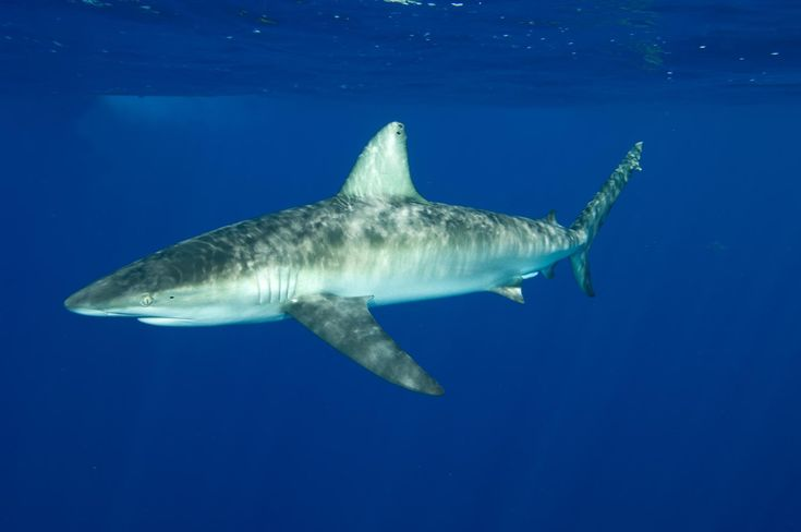 Scientists urge Brazilian government to stand strong on aquatic animal protections