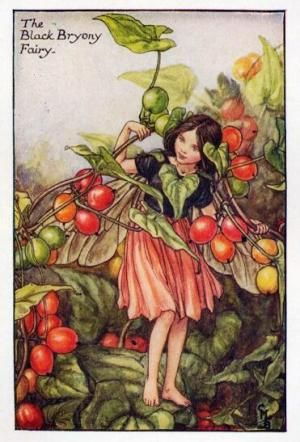 Autumn Fairies:  The Black Bryony Fairy By Cicely Mary Barker