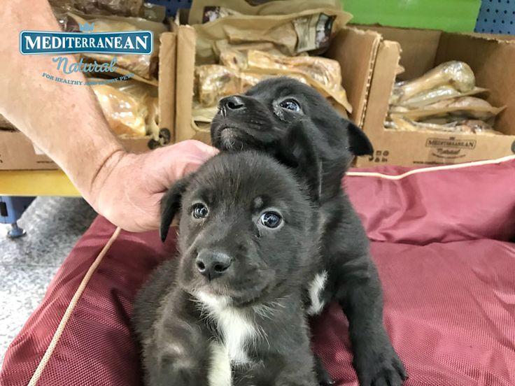 Buscamos familia para estos dos cachorros. ¡Comparte con todos aquellos que puedan estar interesados en darles un hogar! 😉  #adopta #MediterraneanNatural