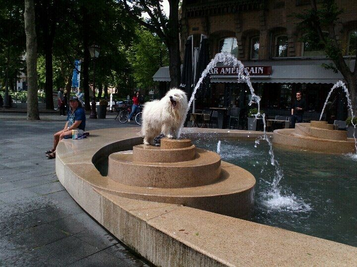 Playing with water. Dog's show in Amsterdam.