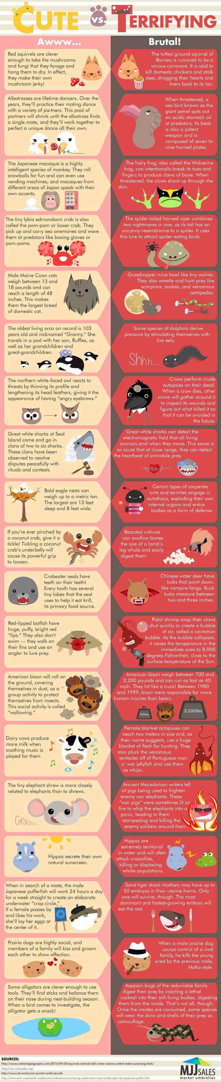 Cute vs Terrifying Facts About Animals #Infographic #Animals #Facts