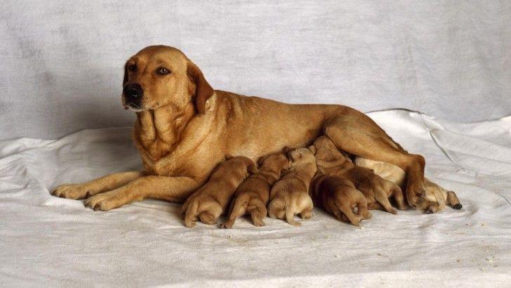 икота у собаки