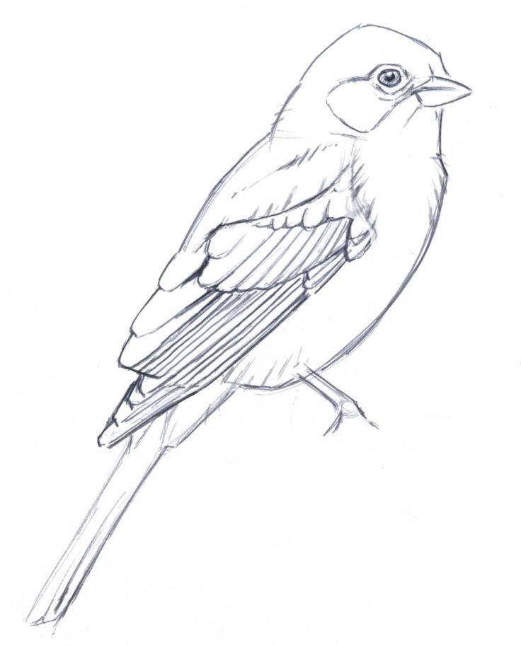 Simple Bird Line Art : The best bird drawings ideas on pinterest