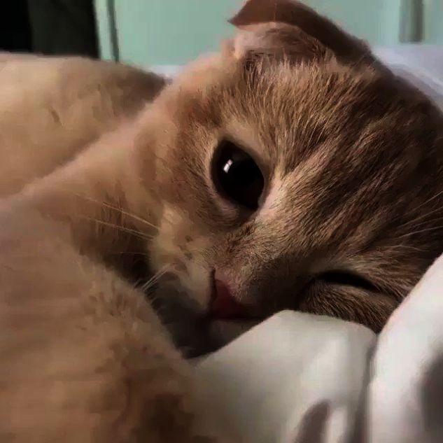 Kittens On Craigslist Whenever Kittens For Adoption Huntsville Al