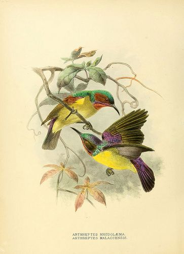 n621_w1150 by BioDivLibrary, via Flickr