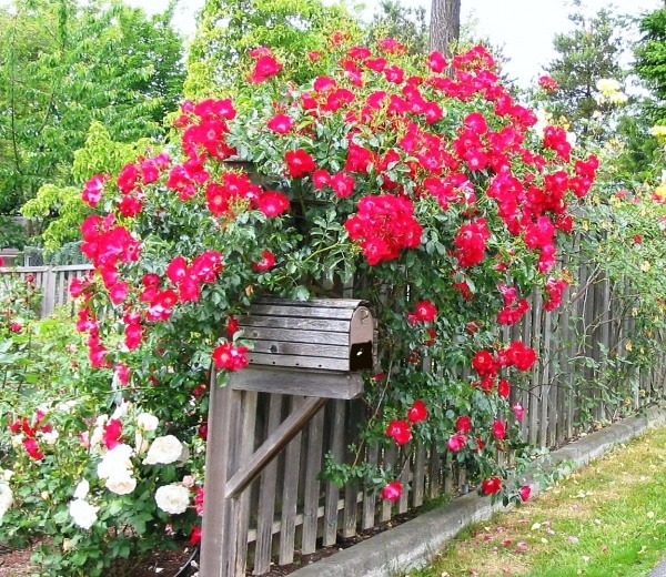 love this mail box....beautiful flowers