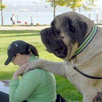 #dogalize Il cane più grande del mondo e gli altri cani da record #dogs #cats #pets