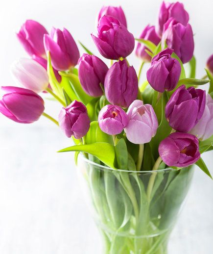 Tulip Care 101: Be mindful that tulips grow after they're in the vase when you're cutting the stems.