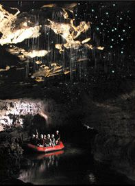Glow worms in Waitomo Cave, New Zealand