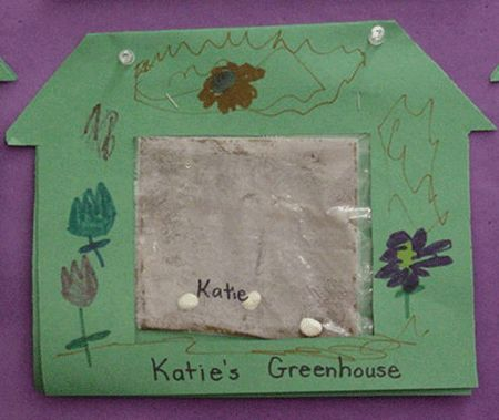 Fold a paper towel and spray it with water. Put a paper towel and three lima beans (that had been soaked in water for about an hour) into a Ziploc bag. The Ziploc bags should be stapled inside the greenhouses and attached to a bulletin board where the class can watch the seeds grow.