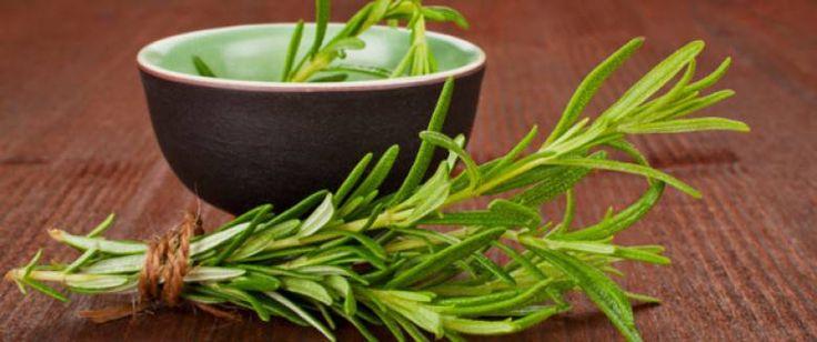 Une plante merveilleuse: le romarin combat la fatigue tout en énergisant le corps et l'esprit !Vous avez du romarin dans votre jardin ? Excellent choix !