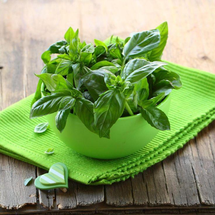 SOUND: http://www.ruspeach.com/en/news/11172/     Базилик - это однолетнее растение и популярная пряность. Базилик используется в парфюмерии и пищевой промышленности. Из него делают эфирное масло. В качестве пряности базилик хорошо сочетается с рыбой, мясом, овощами. К тому же, это лек