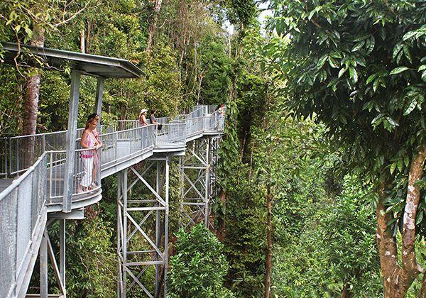 Mamu Tropical Skywalk, Qld