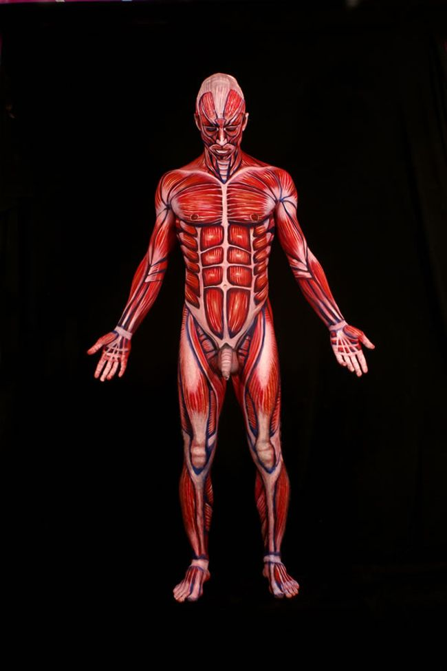 the human anatomy, painted onto real human bodies | parrots, human, Muscles