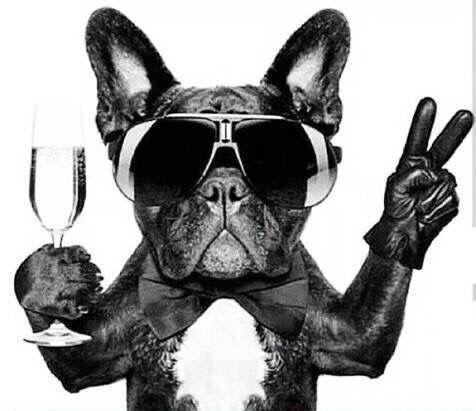 Image result for jet black french bulldog