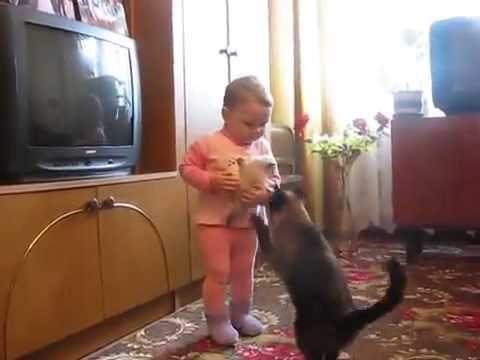 Mom Cat Really Wants Kitten Back