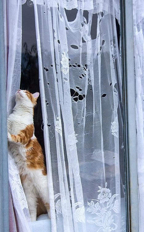 63 Best Cats Love Curtains Images On Pinterest