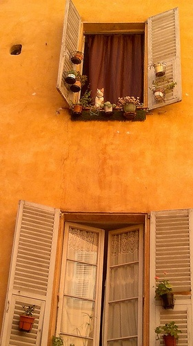 A cat in a window at Nice